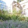 ロンドンのガーデン(クライストチャーチ・グレイフライアーズ・チャーチ・ガーデン)