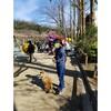 岐阜の梅林公園で梅を見てきたよ。