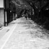 今日の1枚 #46 桜吹雪