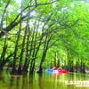 西表島カヌー・マングローブで木洩れ陽を感じよう