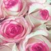 薔薇の名前 ドルチェヴィータ