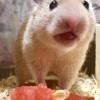 ハムスターにあげていい食べ物🍙 -果物編-