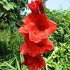 夏の花(4)