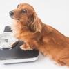 身長150センチ女子が平均体重を目標に糖質制限したら10キロも痩せた話