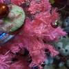 クリスマスツリーの片付けとジェラトーニとカップケーキ♪