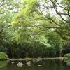 夏の森林浴。池のある風景を歩いてリフレッシュ。