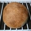 国産小麦ゆめちからプチパン