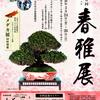 【告知】盆栽組合と協会の謎【春雅展】