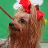 2018 医獣祭 犬・犬・犬! 2