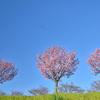 春の足跡①