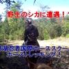 野生のシカに遭遇!?琵琶湖忍者国際ホーススクールでホーストレッキング!