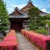 京都・花園 - 妙心寺 慈雲院のサツキ