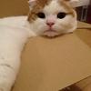 【猫】猫とダンボール