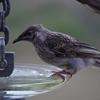 廃品利用の鳥の餌台