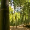 稲荷山⑥:竹取物語ゆかりの地、伏見神宝神社