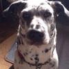 我が家の愛犬への手紙