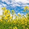 春一番!暖かくなっていく喜びと花粉の懸念