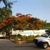 【東アフリカ⑨】乗り合いバスに振り回されるも 無事ザンビアの首都に到着(ルサカ)