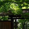 旧朝倉家住宅にて新緑を撮る April 2018