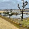 あじさい公園の池(千葉県多古)
