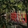 Bangkrachao/บางกะเจ้า(Samut Prakan)を歩く Day3 -早朝散歩!-