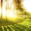 自然の中で心と身体を解放しよう