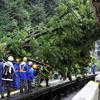 原宿駅に倒木、14万人影響 山手線5時間ストップ