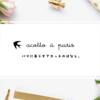 ブログのデザインを新しくしました♪