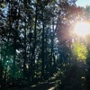 「闇に輝く大きな光」イザヤ9:2〜マタイ4:15.16