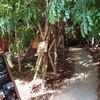 【神戸カフェ】三宮の定番お洒落カフェ「GREEN HOUSE Silva(グリーンハウスシルバ)」