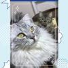 うちの猫ちゃんが紙ネコに選ばれた!!