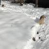雪道で遊ぶわんこたち