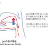 アメリカ英語の発音ノウハウ (5) ~ 舌の筋肉の使い方・Quick American Glide編