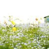こどもの日・花の日礼拝
