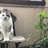 世界猫の日🐾