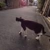 ネコが好きだ。初めて家に来たのが小3くらいだったか...