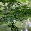 紅葉が待ち遠しい!目黒の東京都庭園美術館でTAMRON SP 45mm F/1.8 Di VC USDをレビュー