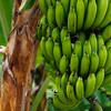 【日常】今なぜバナナが熱い『バナナジュース』の専門店が出没