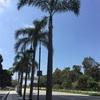 ロサンゼルス旅行5日目〜ビバリーの街で朝ランニング〜