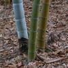 竹の歌(3)