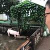 【埼玉】遊べる!?お肉屋さん/サイボクハム