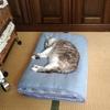 朝方3時4時、猫に毎日起こされる