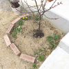 ユスラウメ花壇の改造