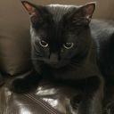 猫の本棚名作紹介ブログ