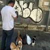 【トルコ滞在記15】猫の楽園、イスタンブール