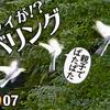 1007【セキレイのホバリング】カルガモ求愛ダンスと悲劇の奇形エンジェルウイング。スズメの喧嘩とカワウ。花と蝶【 #今日撮り野鳥動画まとめ 】 #身近な生き物語
