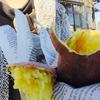 ナオキくんちのおイモ♡農ガールズmeets農メンin豊橋~日本の農業は温かい~