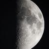 上弦の月(月齢7.496)