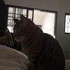 「猫ブーム」という言葉が怖い。我が家の猫たちは保護猫出身