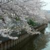 私と生活:今年桜撮影日に起こった出来事